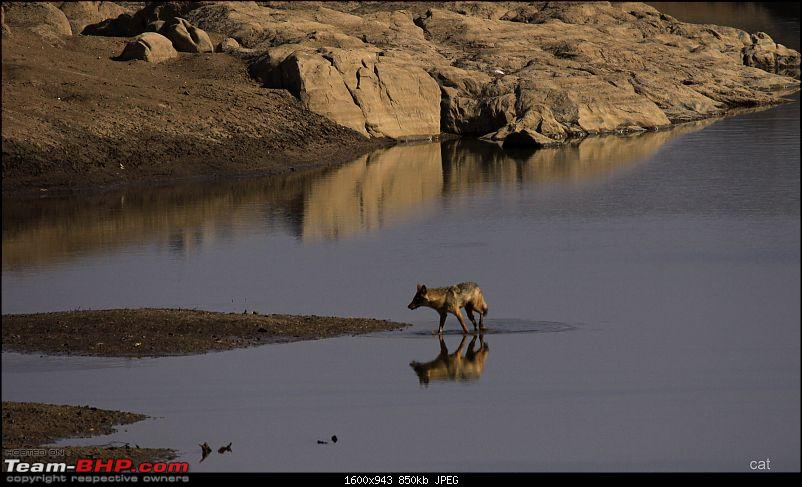 """Reflections on Wildlife Addictions """"Pench and Kanha National Park""""-132.jpg"""