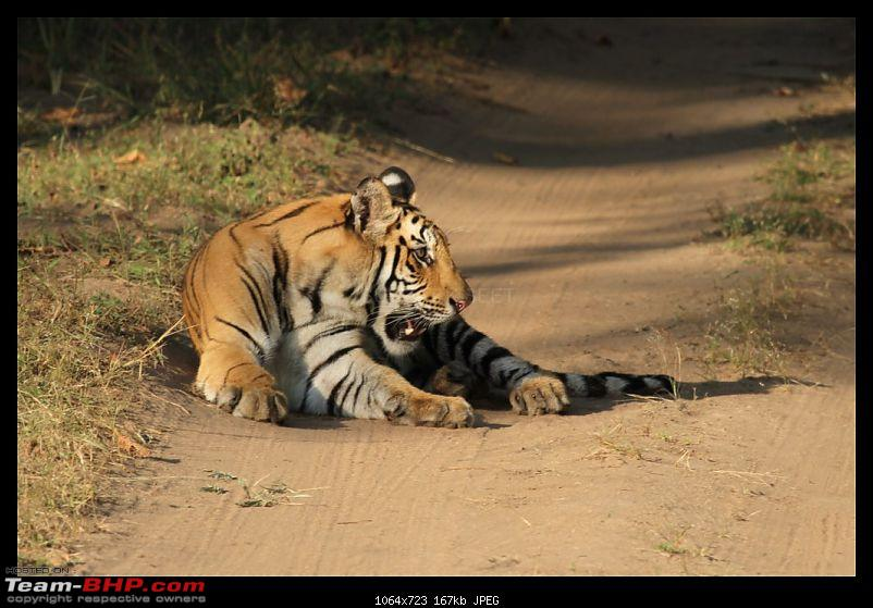 Trailing the Big Cat at Bandhavgarh-214-1024x768.jpg