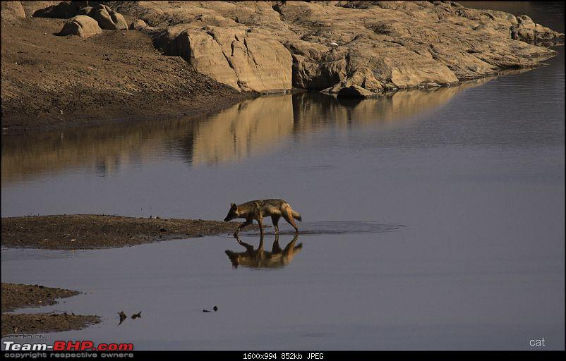 "Reflections on Wildlife Addictions ""Pench and Kanha National Park""-133.jpg"