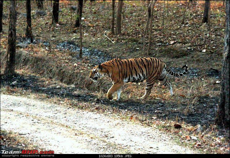 Pench Tiger Reserve - New season starts with a Bang !!!-img_9957.jpg