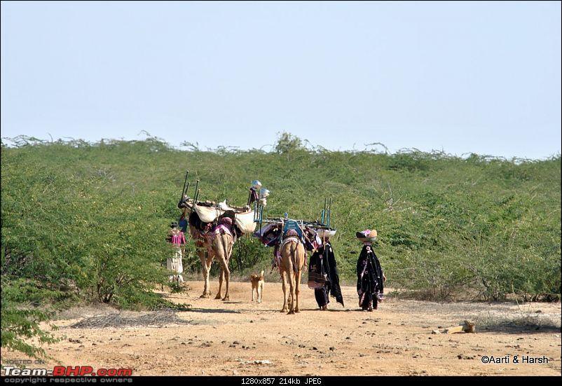 Raiders of the Rann: A Kachchhi Kaleidoscope (Gujarat)-dsc_2082.jpg