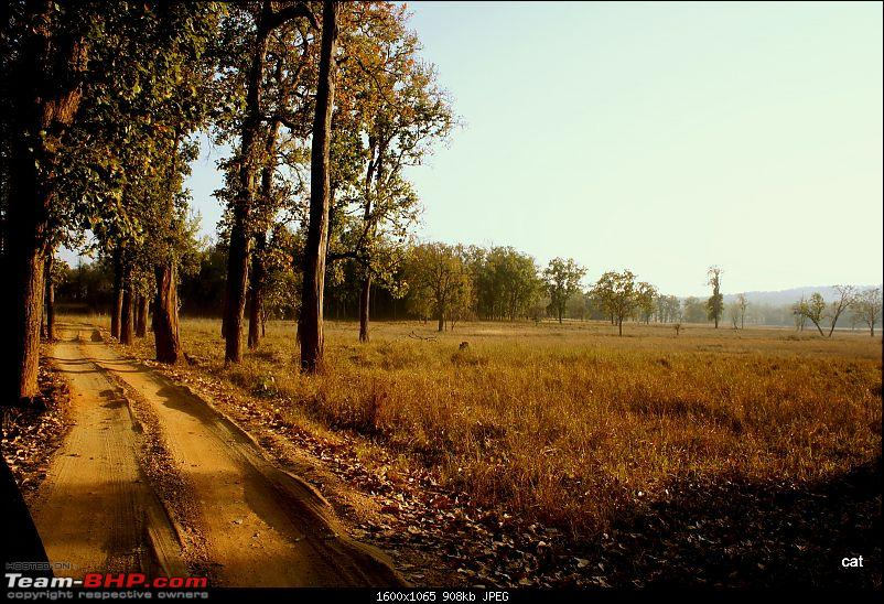"Reflections on Wildlife Addictions ""Pench and Kanha National Park""-7.jpg"