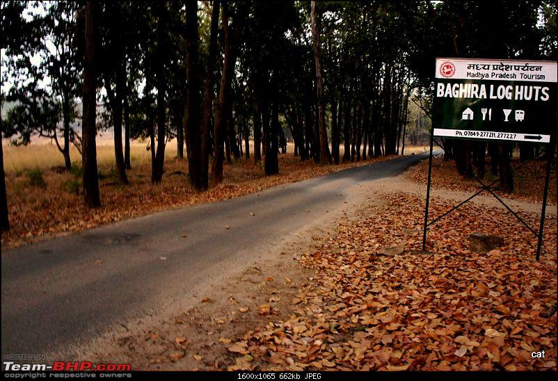 "Reflections on Wildlife Addictions ""Pench and Kanha National Park""-16.jpg"