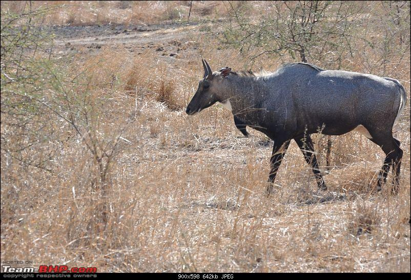 �Sasan Gir� � The Last Home to Asiatic Lion-girnp-19.jpg