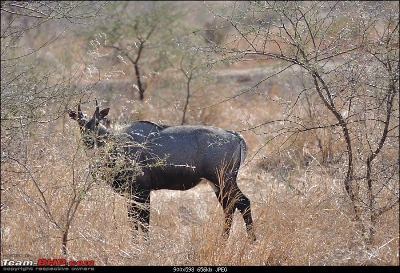 �Sasan Gir� � The Last Home to Asiatic Lion-girnp-20.jpg