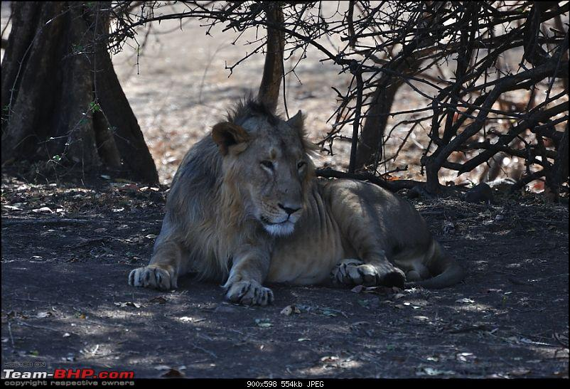 �Sasan Gir� � The Last Home to Asiatic Lion-girnp-27.jpg