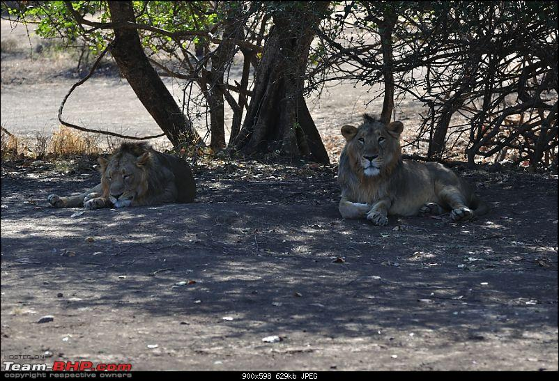 """Sasan Gir"" – The Last Home to Asiatic Lion-girnp-29.jpg"