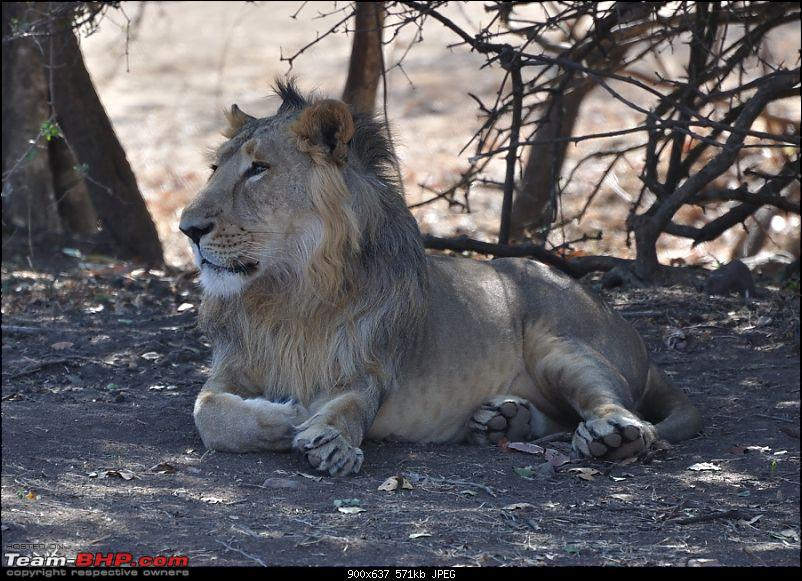 """Sasan Gir"" – The Last Home to Asiatic Lion-girnp-32.jpg"