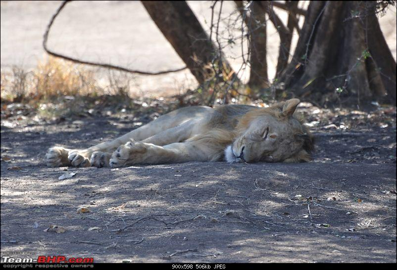 �Sasan Gir� � The Last Home to Asiatic Lion-girnp-33.jpg