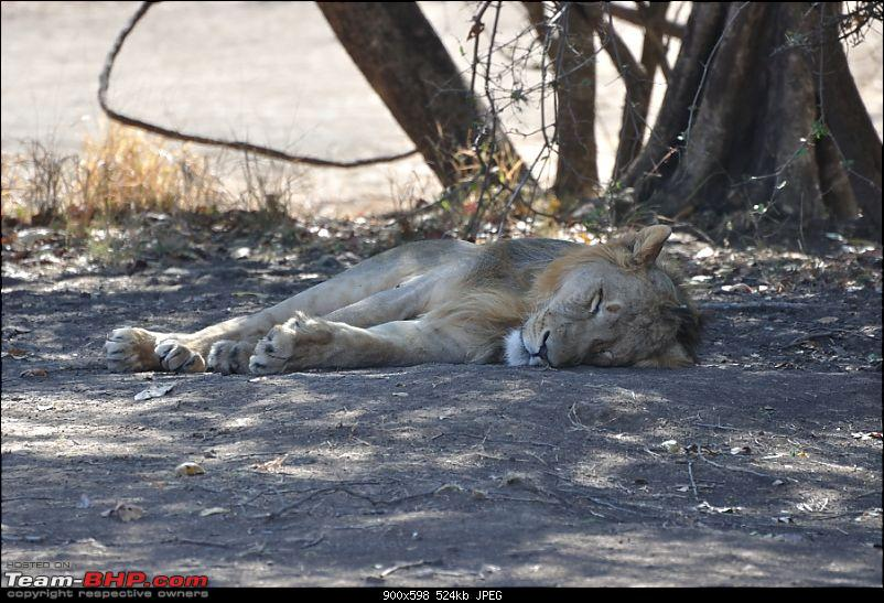 �Sasan Gir� � The Last Home to Asiatic Lion-girnp-40.jpg