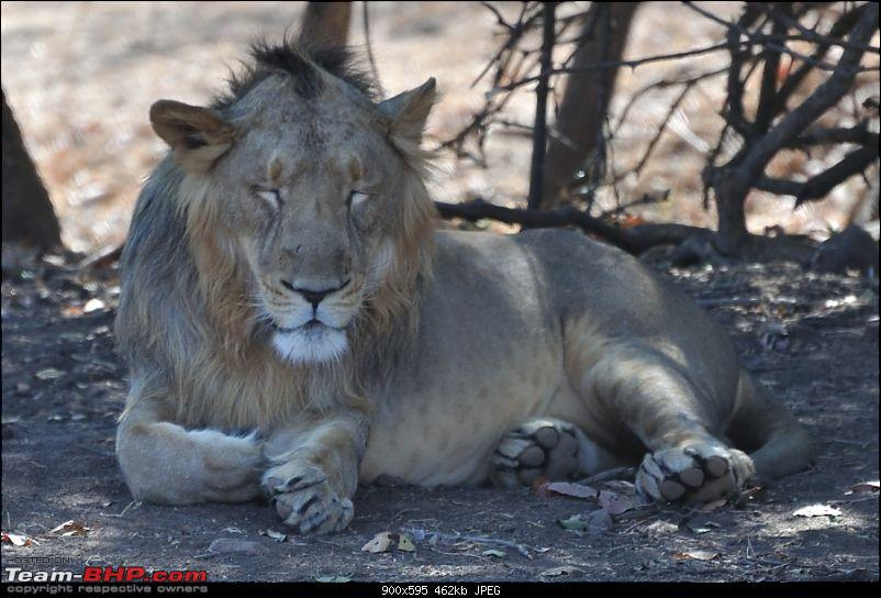 �Sasan Gir� � The Last Home to Asiatic Lion-girnp-42.jpg