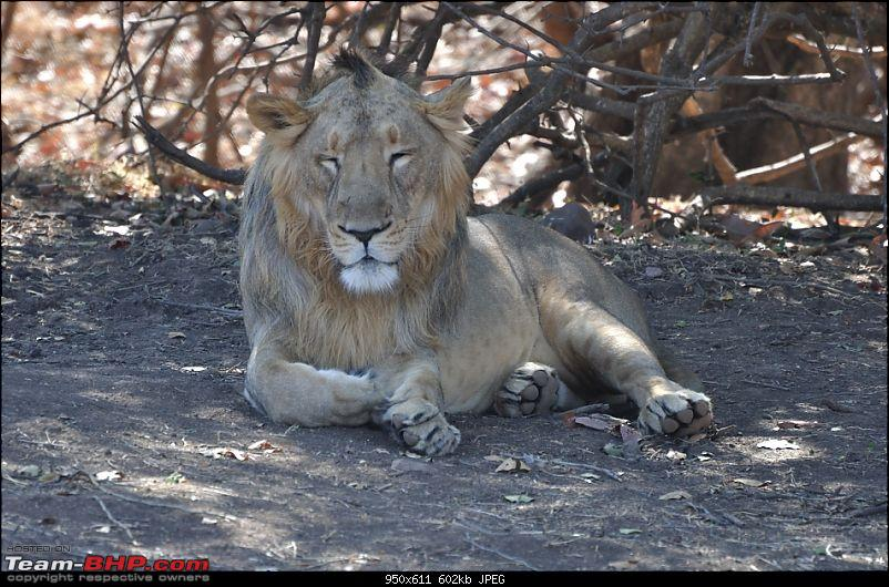 �Sasan Gir� � The Last Home to Asiatic Lion-girnp-44.jpg