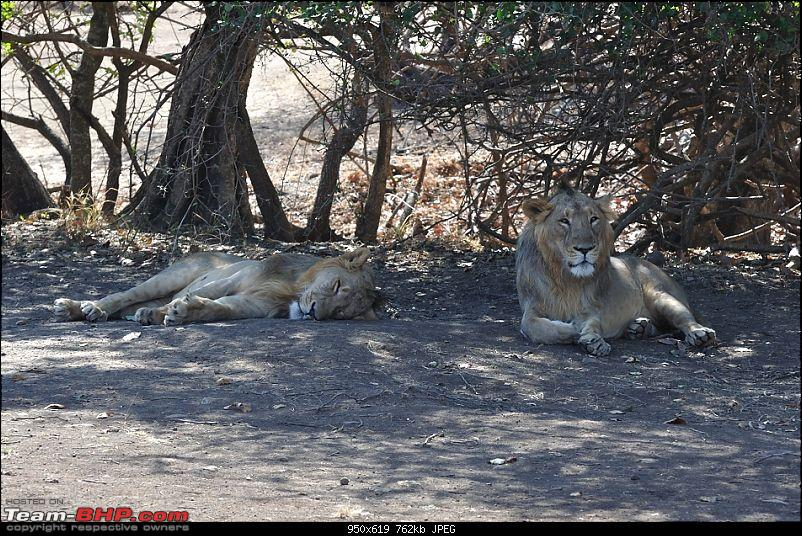 """Sasan Gir"" – The Last Home to Asiatic Lion-girnp-45.jpg"