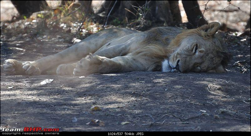 �Sasan Gir� � The Last Home to Asiatic Lion-girnp-47.jpg