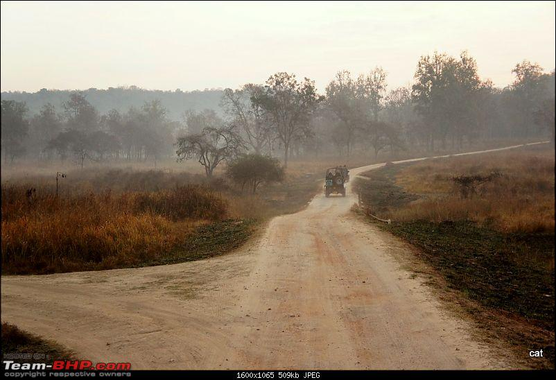 "Reflections on Wildlife Addictions ""Pench and Kanha National Park""-20.jpg"