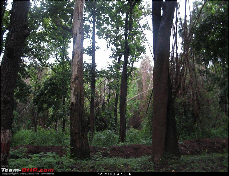 Tresspassing into the capital of King Cobra-aagumbe-017.jpg