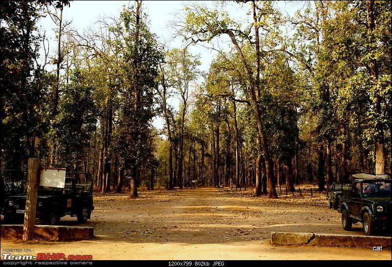 "Reflections on Wildlife Addictions ""Pench and Kanha National Park""-38.jpg"