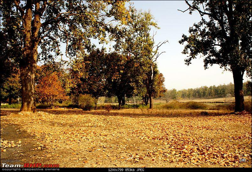 "Reflections on Wildlife Addictions ""Pench and Kanha National Park""-48.jpg"
