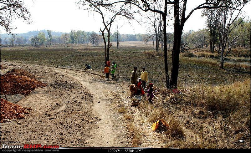 "Reflections on Wildlife Addictions ""Pench and Kanha National Park""-57.jpg"