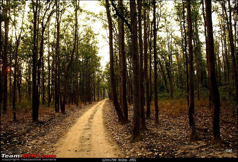 "Reflections on Wildlife Addictions ""Pench and Kanha National Park""-71.jpg"