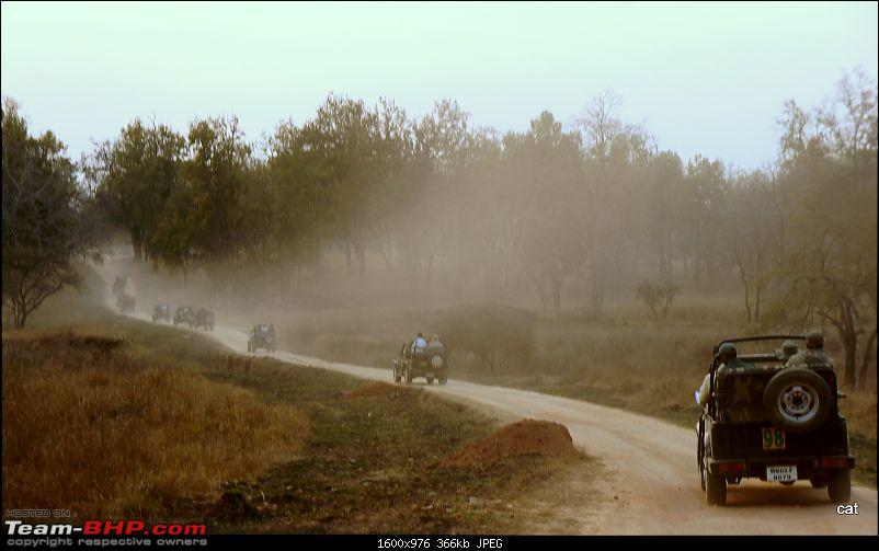 "Reflections on Wildlife Addictions ""Pench and Kanha National Park""-72.jpg"