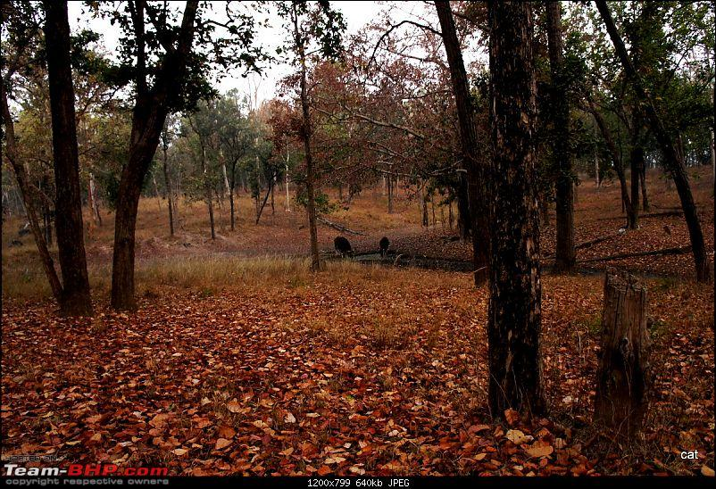 """Reflections on Wildlife Addictions """"Pench and Kanha National Park""""-80.jpg"""