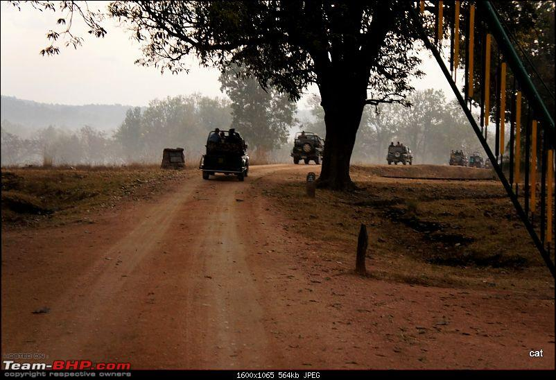 """Reflections on Wildlife Addictions """"Pench and Kanha National Park""""-81.jpg"""