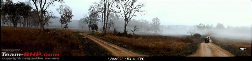"""Reflections on Wildlife Addictions """"Pench and Kanha National Park""""-83.jpg"""