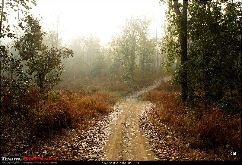 """Reflections on Wildlife Addictions """"Pench and Kanha National Park""""-91.jpg"""