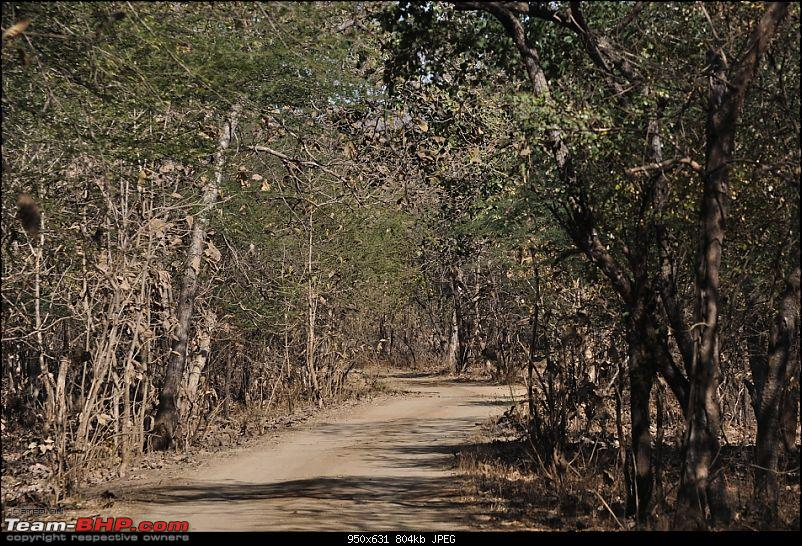 """Sasan Gir"" – The Last Home to Asiatic Lion-girnp-88.jpg"