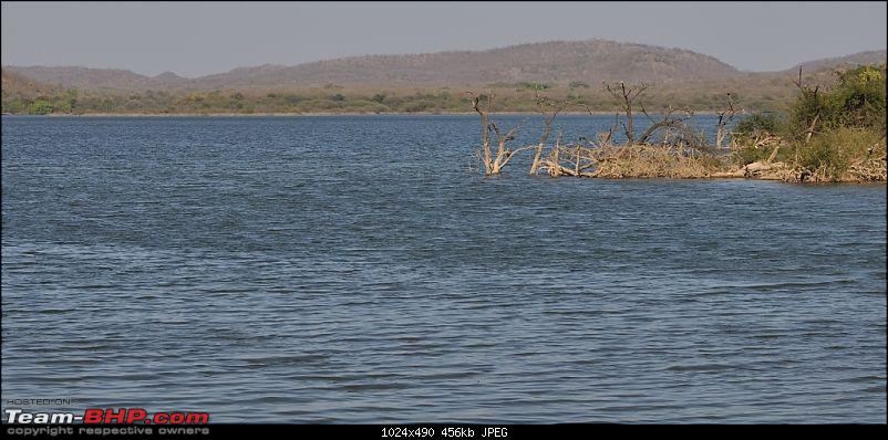 """Sasan Gir"" – The Last Home to Asiatic Lion-girnp-121.jpg"