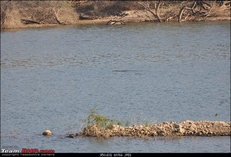"""Sasan Gir"" – The Last Home to Asiatic Lion-girnp-133.jpg"