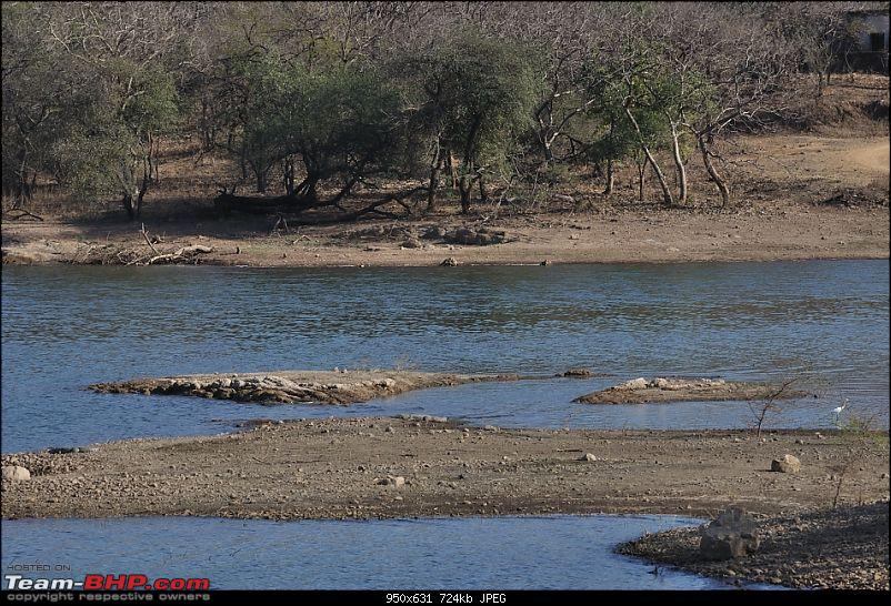 """Sasan Gir"" – The Last Home to Asiatic Lion-girnp-135.jpg"