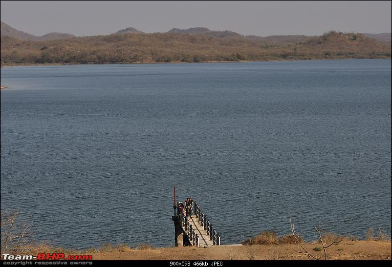 """Sasan Gir"" – The Last Home to Asiatic Lion-girnp-137.jpg"