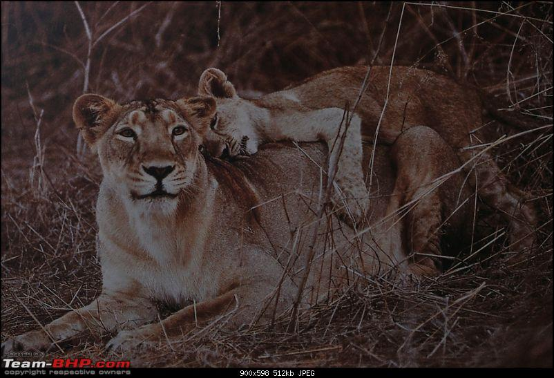 """Sasan Gir"" – The Last Home to Asiatic Lion-girnp-178.jpg"