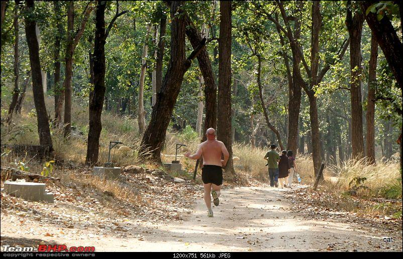 """Reflections on Wildlife Addictions """"Pench and Kanha National Park""""-dsc00597.jpg"""