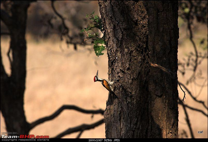 """Reflections on Wildlife Addictions """"Pench and Kanha National Park""""-img_0874.jpg"""