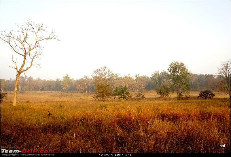 "Reflections on Wildlife Addictions ""Pench and Kanha National Park""-dsc00563.jpg"