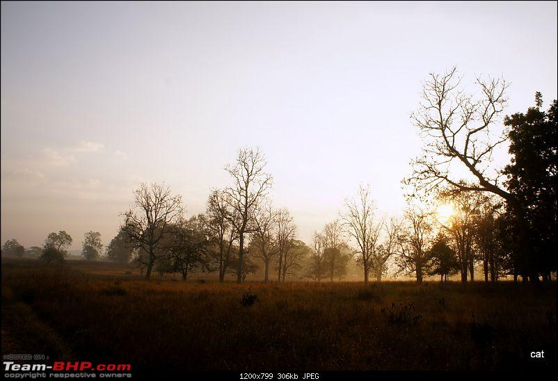 "Reflections on Wildlife Addictions ""Pench and Kanha National Park""-114.jpg"