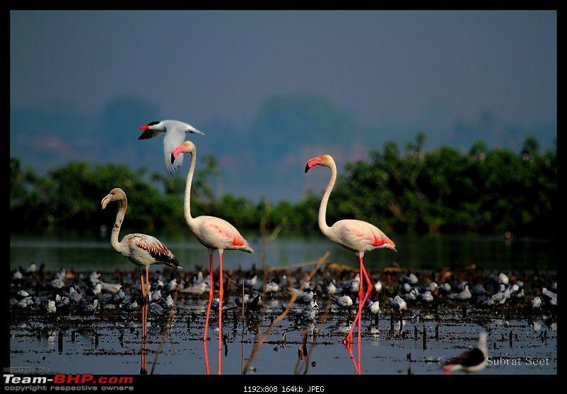 Bhigwan – The Bharatpur of Maharashtra through my lenses-bhigwan82-1280x768.jpg