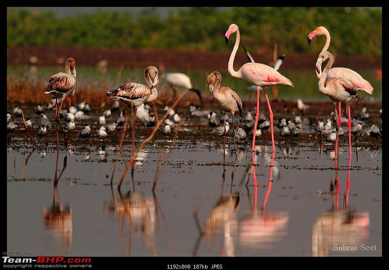 Bhigwan � The Bharatpur of Maharashtra through my lenses-bhigwan85-1280x768.jpg