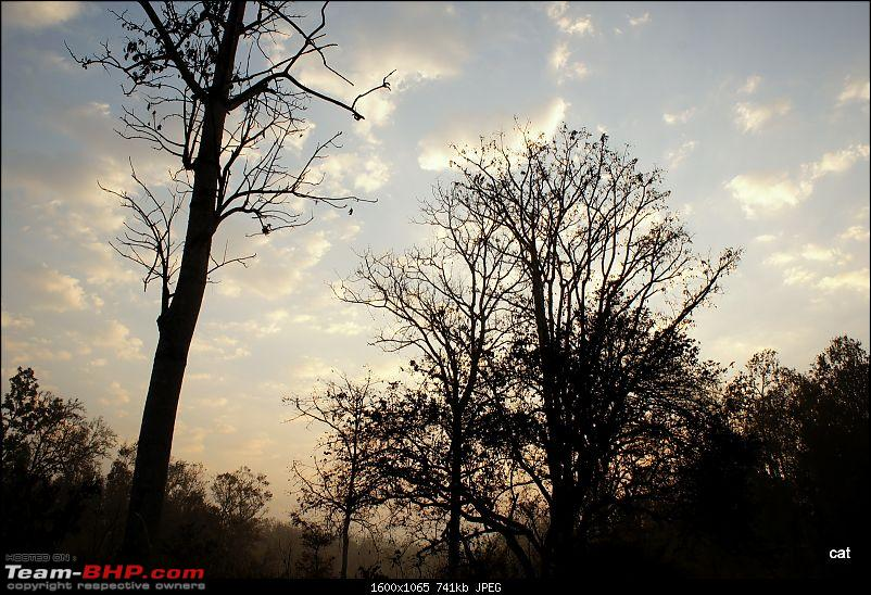 """Reflections on Wildlife Addictions """"Pench and Kanha National Park""""-dsc00646.jpg"""