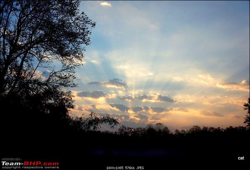 """Reflections on Wildlife Addictions """"Pench and Kanha National Park""""-dsc00554.jpg"""