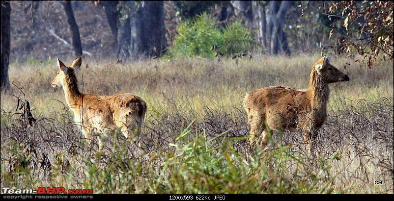 """Reflections on Wildlife Addictions """"Pench and Kanha National Park""""-img_1083.jpg"""