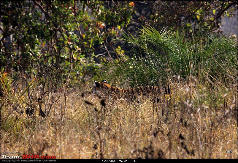 """Reflections on Wildlife Addictions """"Pench and Kanha National Park""""-img_1091.jpg"""