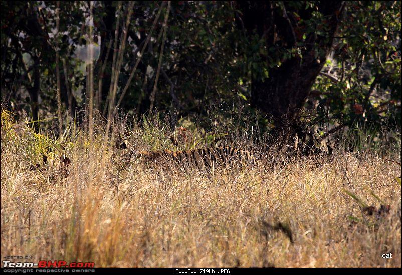 """Reflections on Wildlife Addictions """"Pench and Kanha National Park""""-img_1096.jpg"""