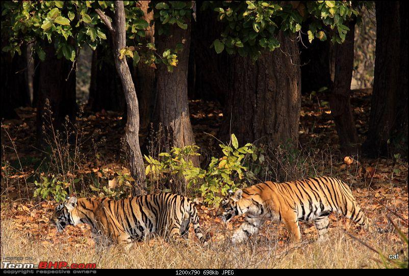 """Reflections on Wildlife Addictions """"Pench and Kanha National Park""""-img_11191.jpg"""