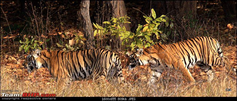 """Reflections on Wildlife Addictions """"Pench and Kanha National Park""""-img_1120.jpg"""