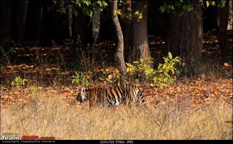 """Reflections on Wildlife Addictions """"Pench and Kanha National Park""""-img_1131.jpg"""