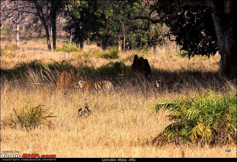 """Reflections on Wildlife Addictions """"Pench and Kanha National Park""""-img_1151.jpg"""